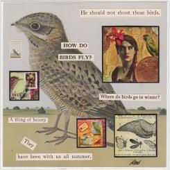 HOW DO BIRDS FLY?